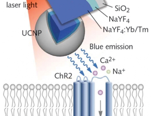 Optogenetics/Brain Research: Optical developments take optogenetics deeper, less invasively