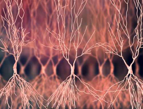 Science News: Ripples in rats' brains tied to memory may also reduce sugar levels